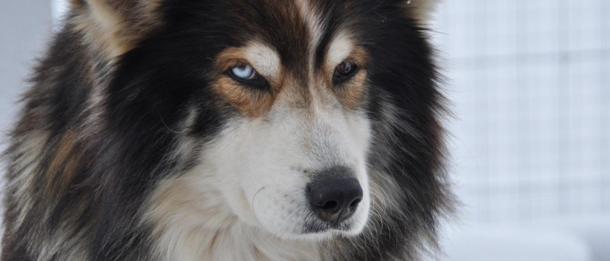 Permalink auf:1. Dingo