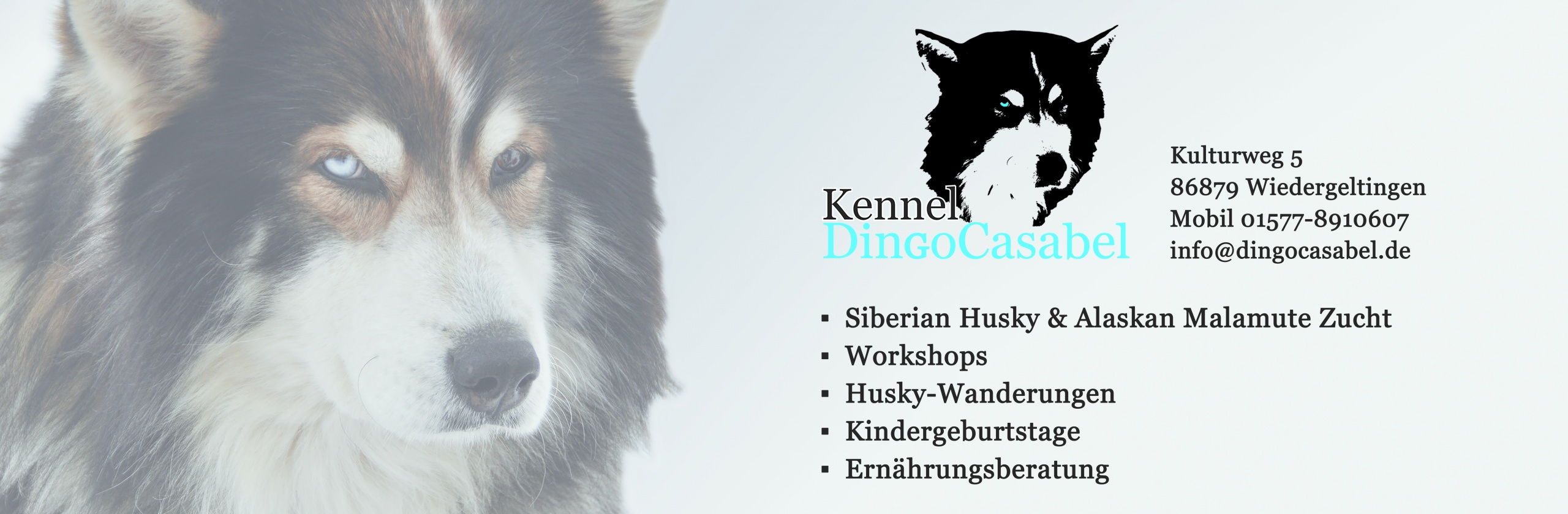 Dingocasabel